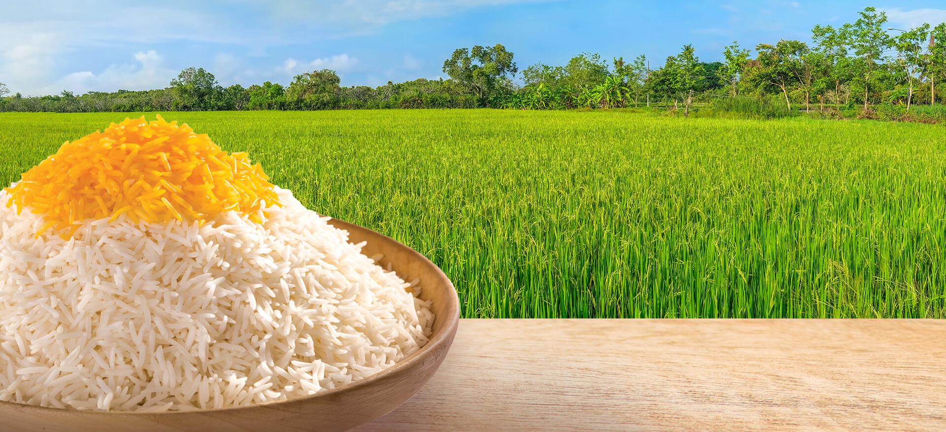 برنج خوشبخت
